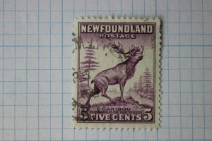 Newfoundland Canada used sc#191 unlisted perf variety p13