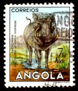 Angola 1953 African Wart Hog Wild Animals 7a Scott.377 Used (#6)