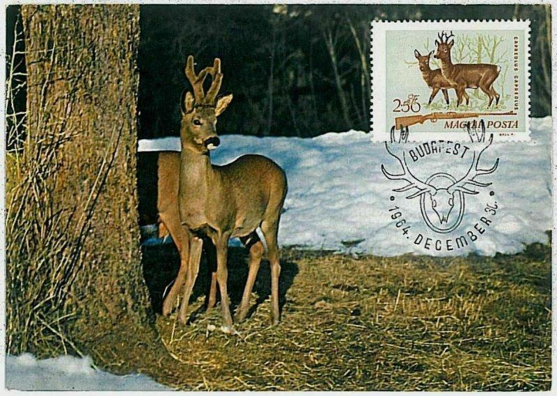 32221 - HUNGARY - POSTAL HISTORY - MAXIMUM CARD  Deer HUNTING FaunaI 1964