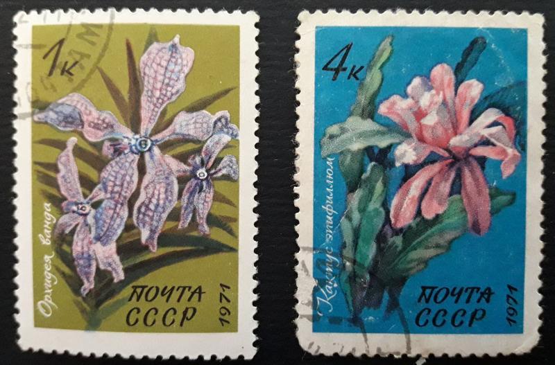 Flowers, 1971, (64-T)