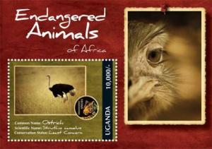 Uganda – Endangered Animals – Ostrich –  Souvenir Sheet – UGA1202S