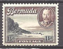 Bermuda 107 (M)