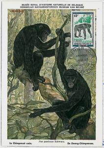 MAXIMUM CARD - POSTAL HISTORY - Congo: Chimpazee, Gorillas, Wild Animals, 1972