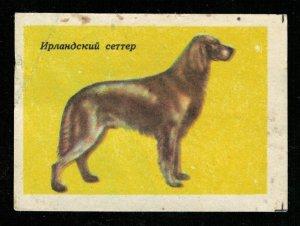 Dog breed: Irish Seter, Matchbox Label Stamp (ST-77)