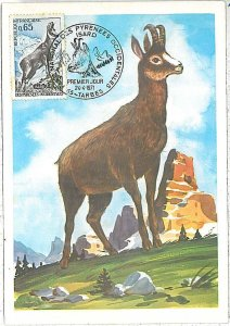 26296 - FRANCE  - POSTAL HISTORY - MAXIMUM CARD 1971 - ANIMALS \ FAUNA