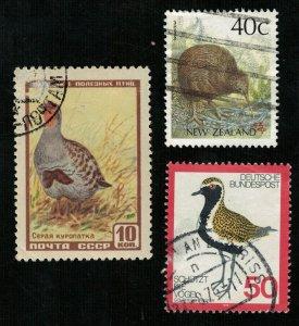 Birds (3347-T)