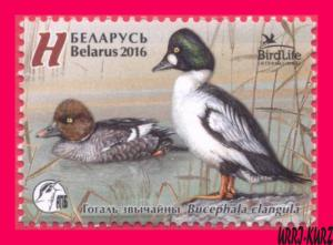 BELARUS 2016 Nature Fauna Birds Bird of the Year Common Goldeneye Duck 1v Sc979