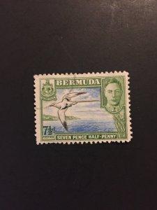 *Bermuda #121D