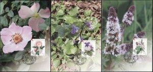 Croatia. 2004. Medicinal Herbs (Mint) Set of 3 Maxi Cards