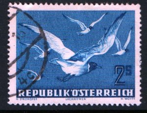AUSTRIA  C56 USED BLACK HEADED GULLS ISSUE 1950