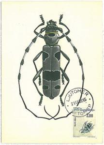 MAXIMUM CARD : INSECTS -  Yugoslavia 1966  # 6