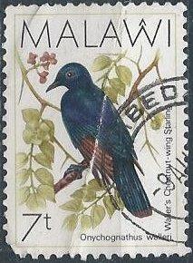 Malawi 521 (u, deep crease) 7t chestnut-wing starling