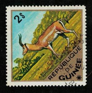 Animals, Republica Guinea (TS-1708)