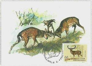 32201 - HUNGARY - POSTAL HISTORY - MAXIMUM CARD  Deer HUNTING FaunaI 1971