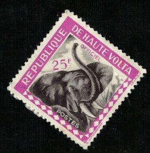 Animal  Elephant 25F (T-5370)