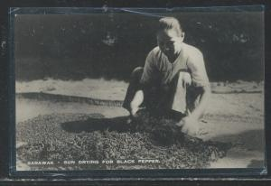 SARAWAK (P2707B) DRYING BLACK PEPPER