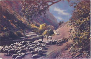 Western Canyon Postcard