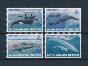 [47380] British Antarctic Territory 1996 Marine life Whales MNH