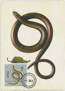 MAXIMU CARD - Fauna REPTILES snake : POLAND 1964  #2