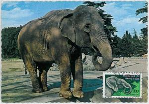MAXIMUM CARD - POSTAL HISTORY - French Upper Volta: Elephants, Safari, Fauna