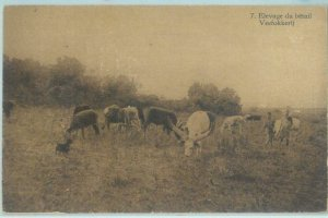 83899 - CONGO BELGE - Postal History -  PICTURE Stationery Card : DOG cattle