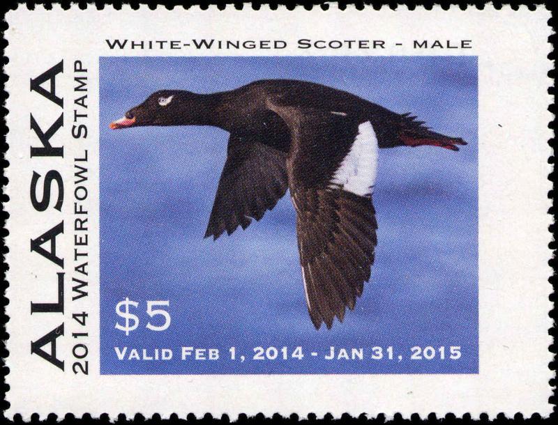 ALASKA #30 2014 STATE DUCK STAMP  WHITE WINGED SCOTER by Milo Bucham