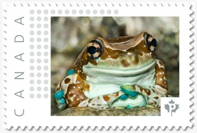 AMAZON MILK FROG, Custom Postage stamp MNH Canada 2018 [p18