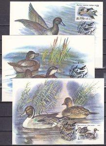 Russia, Scott cat. 6009-6011. Ducks in water issue. Max. Cards. ^