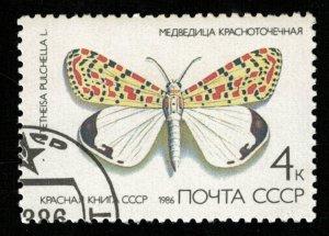 Butterfly (TS-2117)