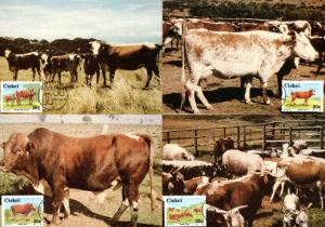 Ciskei - 1987 Nkone Cattle Maxi Card Set