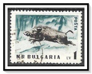 Bulgaria #1009 Wild Boar CTO