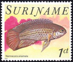 Surinam # 504 mnh ~ 1¢ Fish - Nannacara anomala