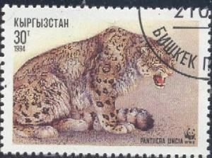 Snow Leopard, Panthera Uncia, Kyrgyzstan SC#31 used