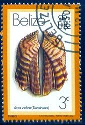 Shell, Arca Zebra, Belize stamp SC#473 used