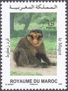 Morocco # 1023 mnh ~ 3.25d Barbary Ape
