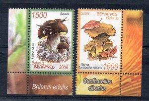 BELARUS - MUSHROOMS - 2008 -