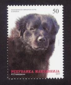 Macedonia Sc# 556 MNH Macedonian Shephard Dog