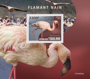 TOGO - 2019 - Lesser Flamingo - Perf Souv Sheet - MNH