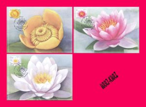 MOLDOVA 2019 Nature Flora Plant Flower Water Lily Nenuphar Pods 3 Maxicards Card