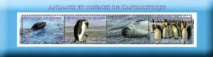 Congo 2017 Penguin Birds Antarctica Animal 4v Mint Souvenir Sheet S/S. (#19)