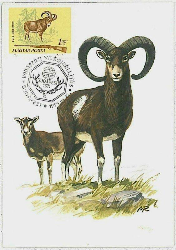 32204 - HUNGARY - POSTAL HISTORY - MAXIMUM CARD  Rams HUNTING Fauna  1971