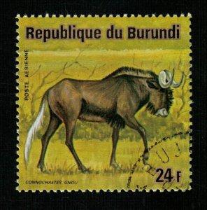 Animals (TS-1697)