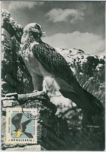 MAXIMU CARD - Fauna animals BIRDS : BULGARIA 1961  #1 - EAGLE