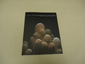 USPS 1980 Commemorative Stamps Special Coral Reefs, U.S.A...