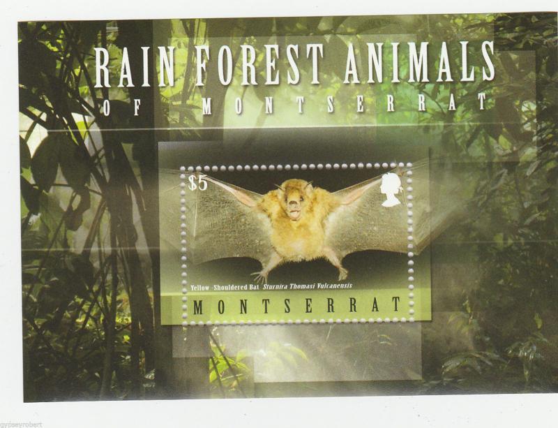 MONTSERRAT   Rain Forest Animals