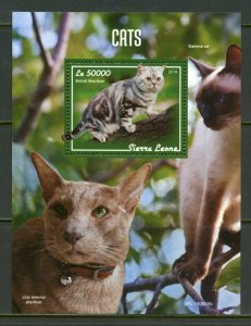 SIERRA LEONE 2019 CATS  SOUVENIR SHEET MINT NEVER HINGED