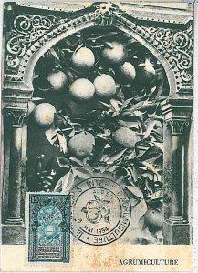 38744  - ALGERIA  - POSTAL HISTORY -  MAXIMUM CARD -  FRUIT: Oranges 1954