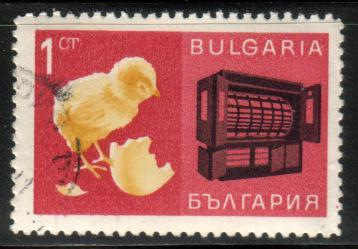 Chick and Incubator, Bulgaria  stamp SC#1599 Used