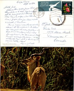South Africa, Picture Postcards, Trains