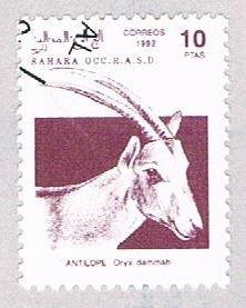 Sahara Occ Antelope 10 - wysiwyg (AP107216)